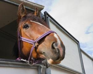 Lån til hestetrailer